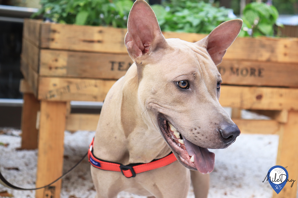 TRAIL and TAIL Pet-Friendly Community